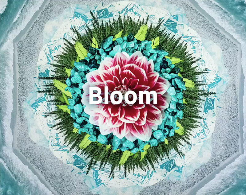 Bloom, Jim Brickman
